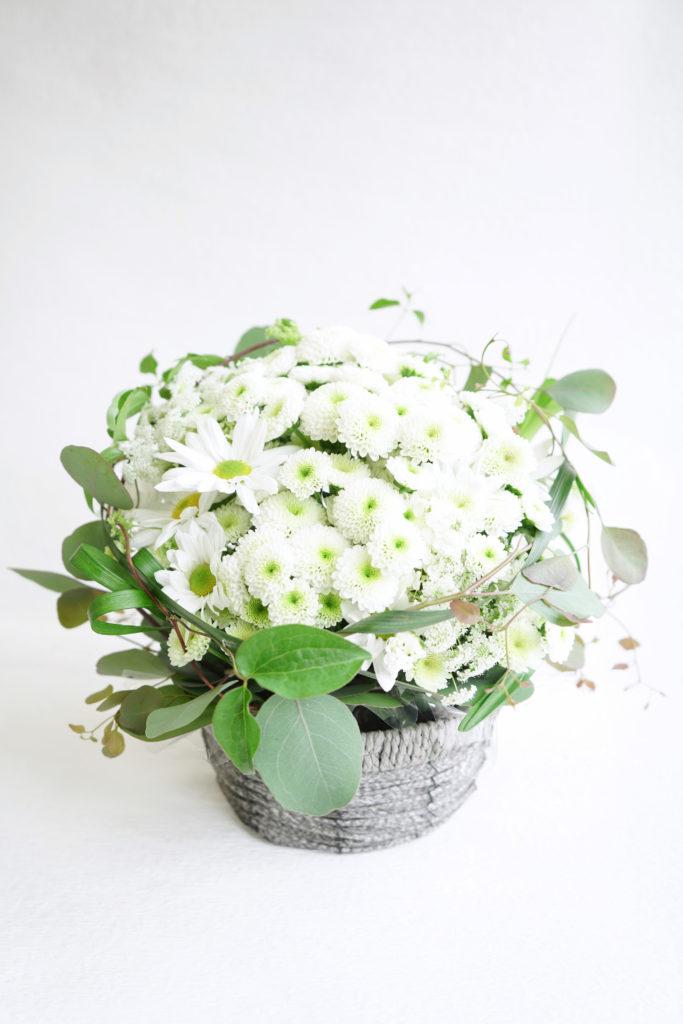 マム(菊)生産者からお届け マムが主役のアレンジメント 本日のマム: コロン(白、ピンポン咲き) セイパレット(白、シングル咲き)